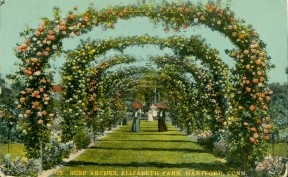 Ladies enjoying the roses at Elizabeth Park, circa 1910